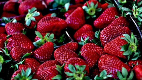 Download Free Strawberry Hd Wallpaper for Desktop and Mobiles