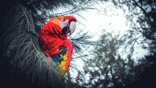 Exotic macaw parrot HD Wallpaper