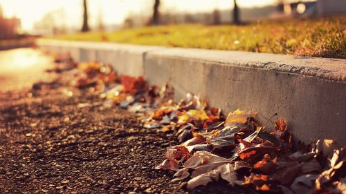 Fall Leaves Sidewalk HD Wallpaper