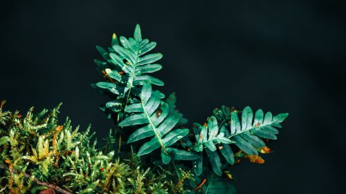 Fern leaves HD Wallpaper