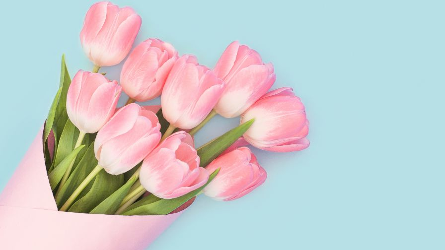 Free Download Beautiful Pink Tulips Flower Wallpaper for Desktop and Mobiles