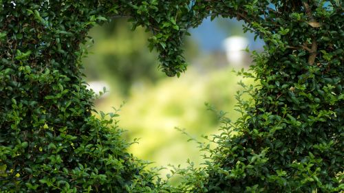 Free Download Best Green Hearts Leaves Wallpaper for Desktop and Mobiles