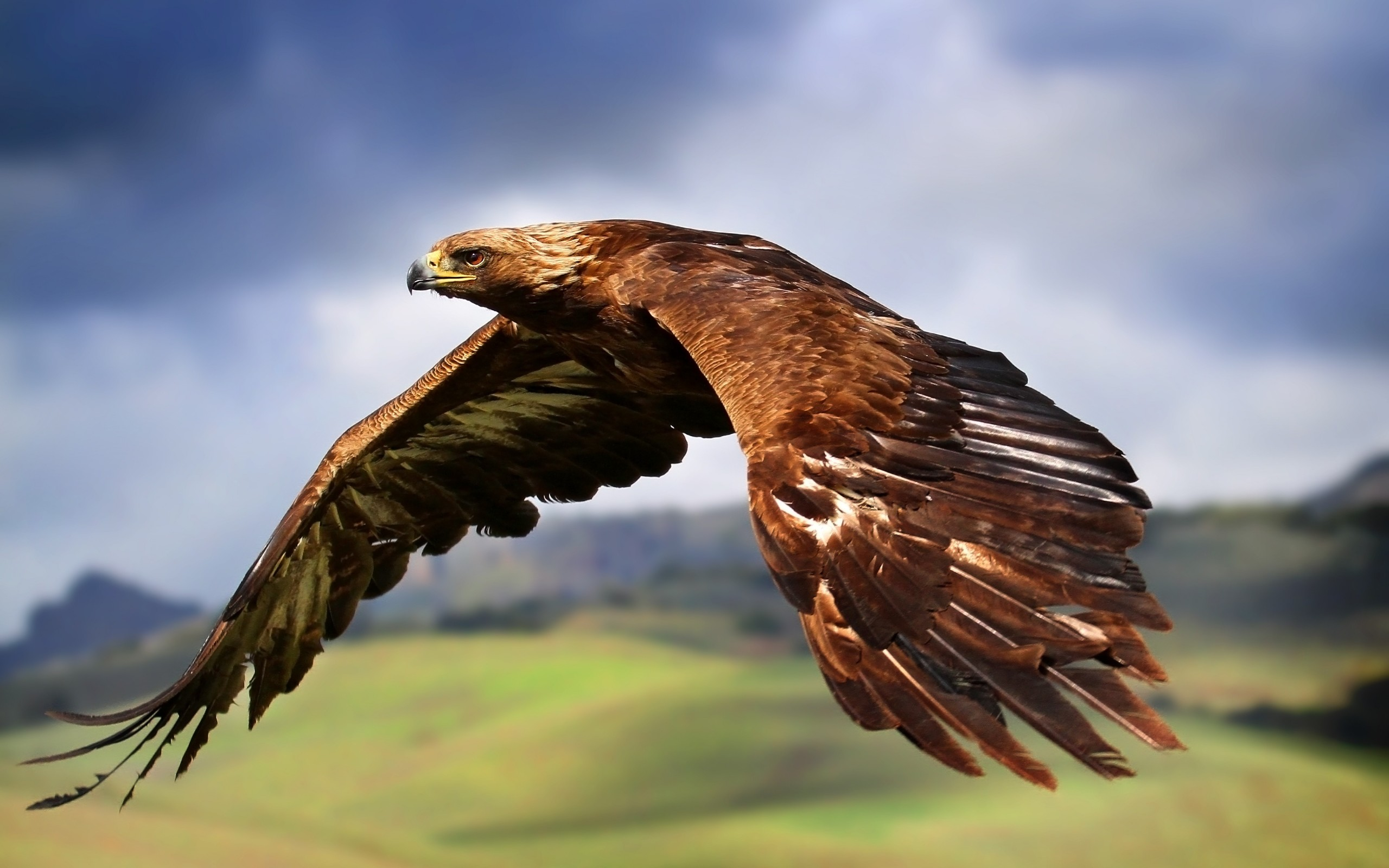 Free Download Golden and Mighty Eagle wallpaper