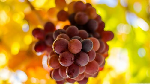 Free Download Grapes Fruit Hd Wallpaper for Desktop and Mobiles