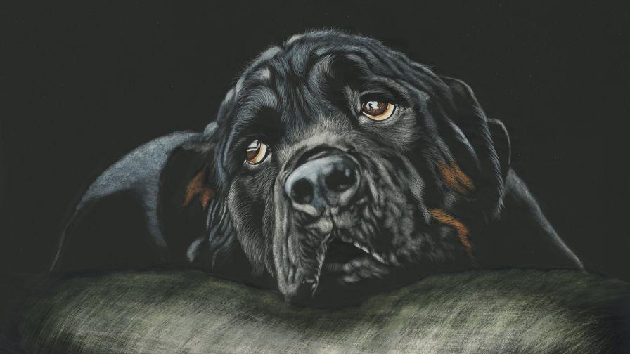 Free Download Rottweiler Puppy Wallpaper Full HD