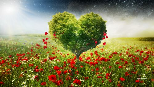 Free Green Heart Tree Poppies Hd Wallpaper for Desktop and Mobiles