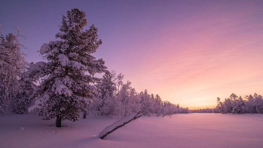 Frosty Sunrise Forest