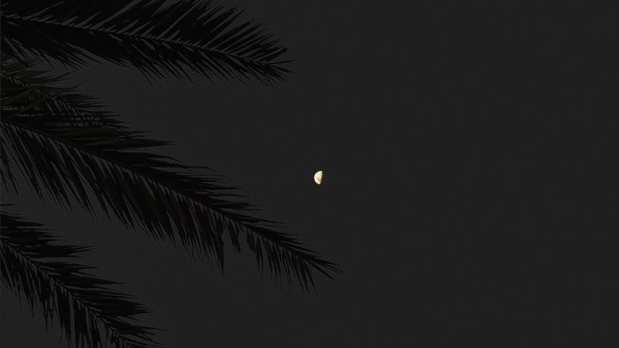 Full moon over tropical trees HD Wallpaper