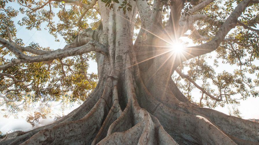 Giant Tree Roots Hd Wallpaper Wallpapersnet