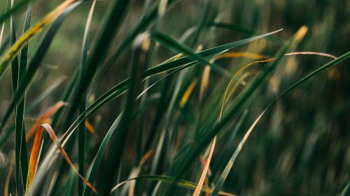 Grass macro image HD Wallpaper