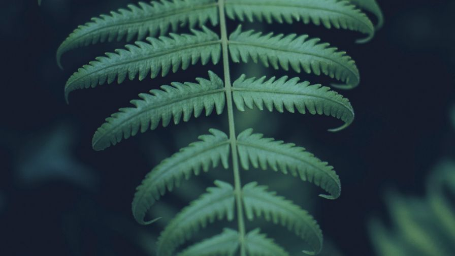 Green carved plant HD Wallpaper
