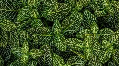 Green leaves macro image HD Wallpaper