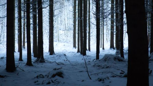 Hike on a snowy forest HD Wallpaper