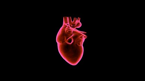 Human heart HD Wallpaper