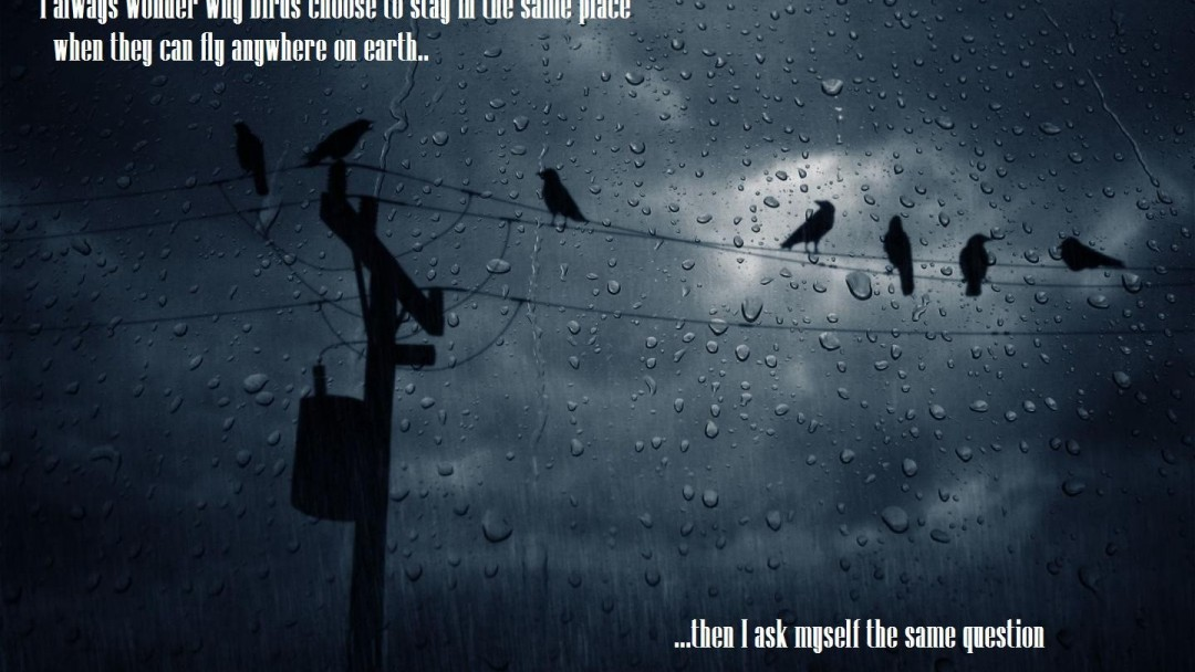 I always wonder why birds... HD Wallpaper