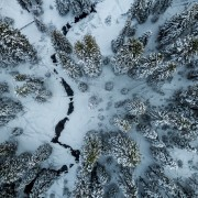 Ice crack next to trees HD Wallpaper