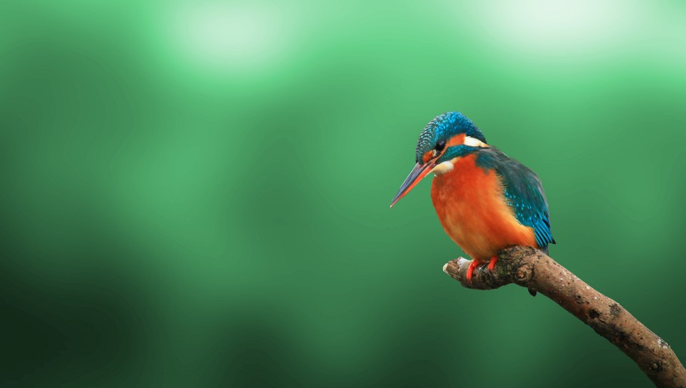 Kingfisher Bird 4K HD Wallpaper