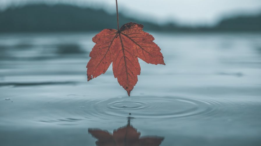 Leaf reflection on the water HD Wallpaper