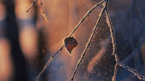Macro image of a leaf at snow HD Wallpaper