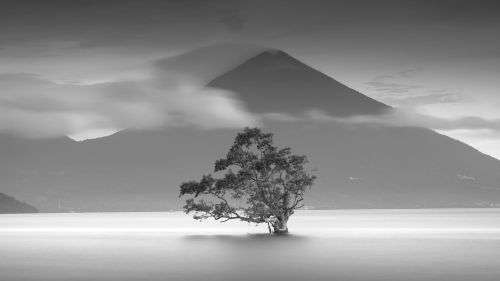 Monochrome tree image HD Wallpaper