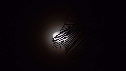 Moon covered by tropical tree HD Wallpaper