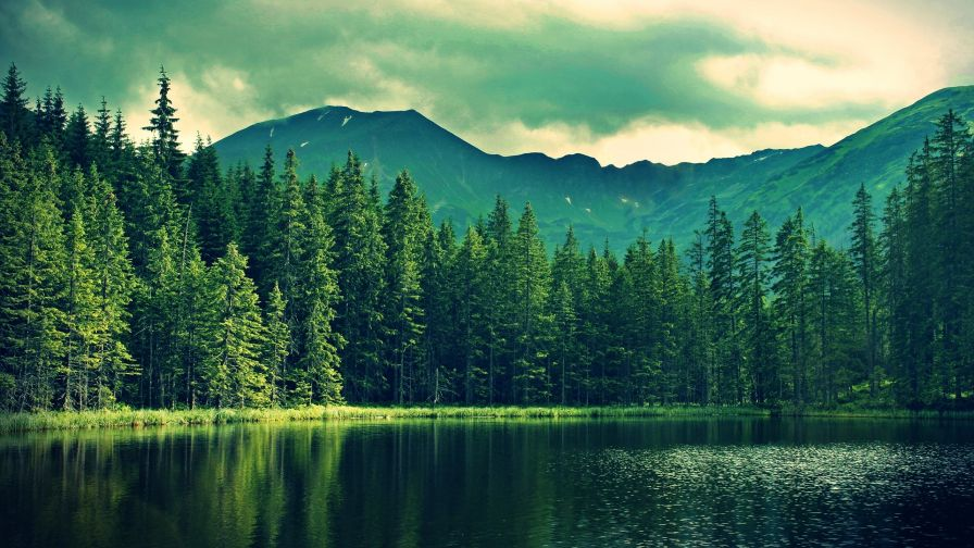Mountain Forest Hd Wallpaper Wallpapersnet