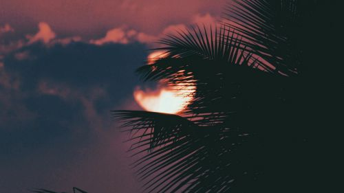 Palm tree hiding the moon HD Wallpaper