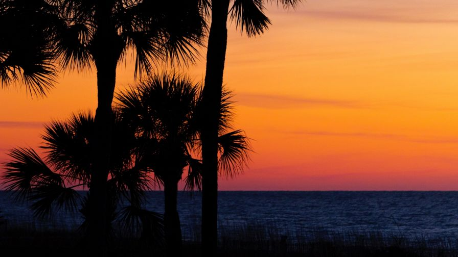 Palm trees at the sunset HD Wallpaper