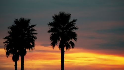 Palm trees under the sunset HD Wallpaper