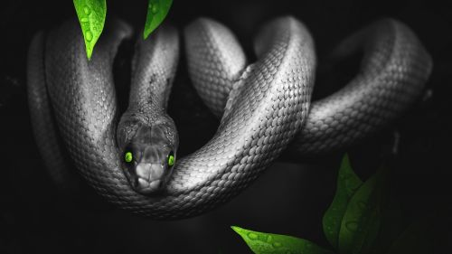 Photoshop snake HD Wallpaper