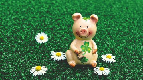 Pig doll sitting at the grass HD Wallpaper