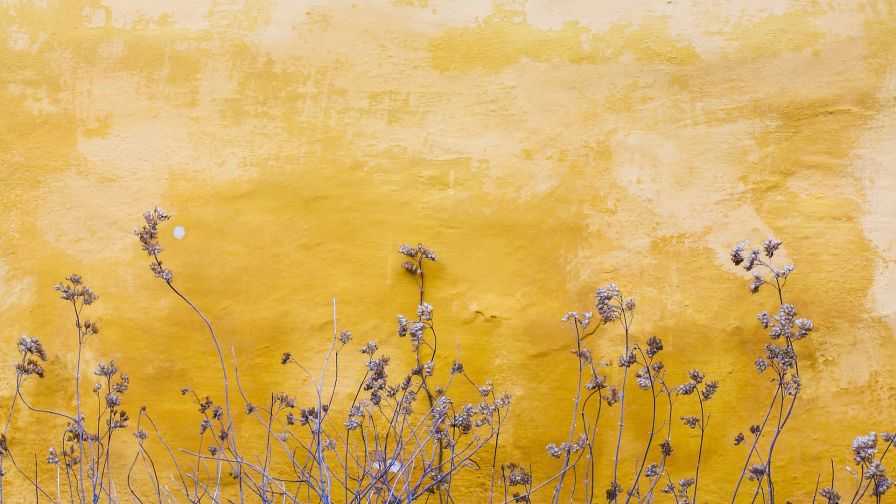 Plants next to a yellow wall HD Wallpaper