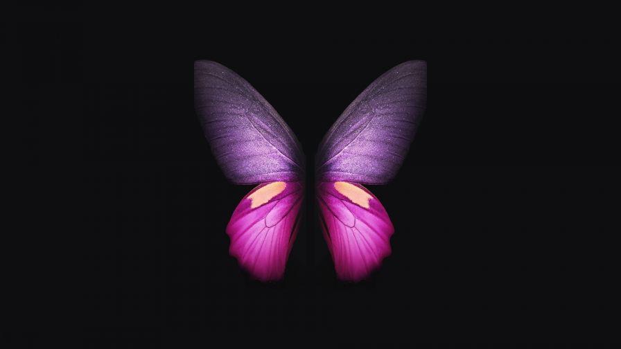 Pretty Butterfly Hd Wallpaper Wallpapers Net