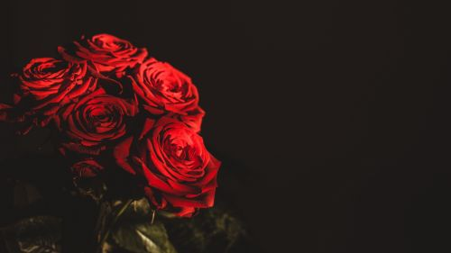 Red roses bouquet HD Wallpaper
