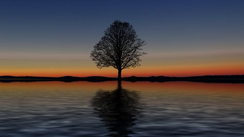 Reflection of a tree HD Wallpaper