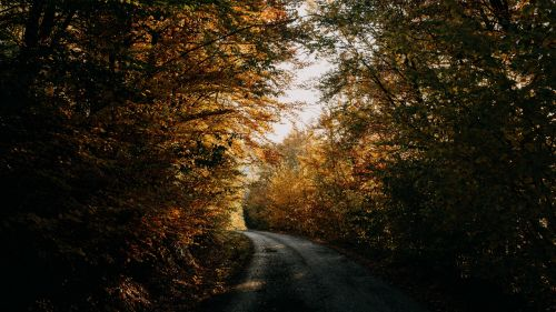 Road inside forest at Autumn HD Wallpaper