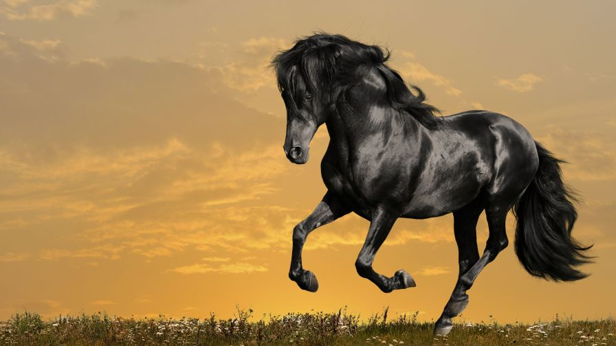 Running Black Horse Hd Wallpaper for Desktop and Mobiles