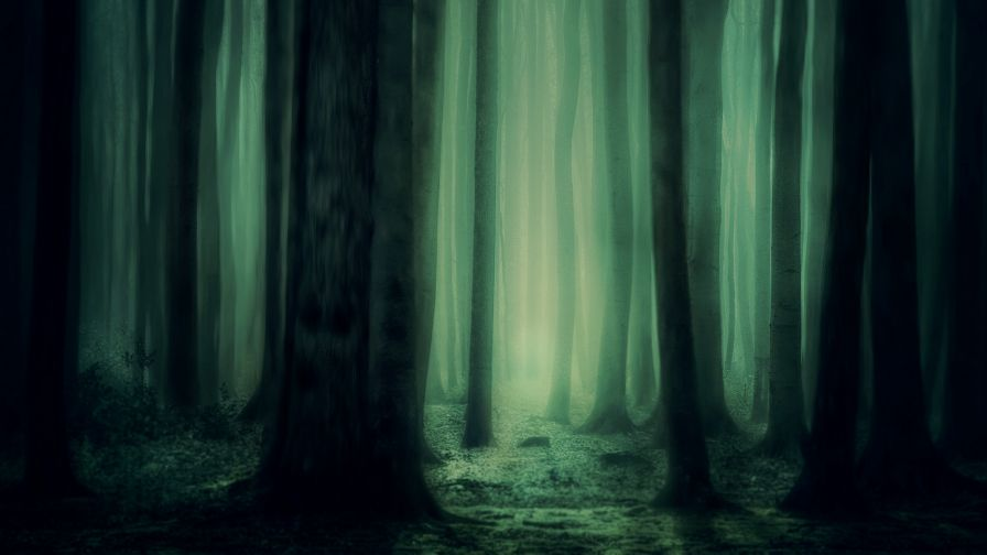 Scary forest image HD Wallpaper