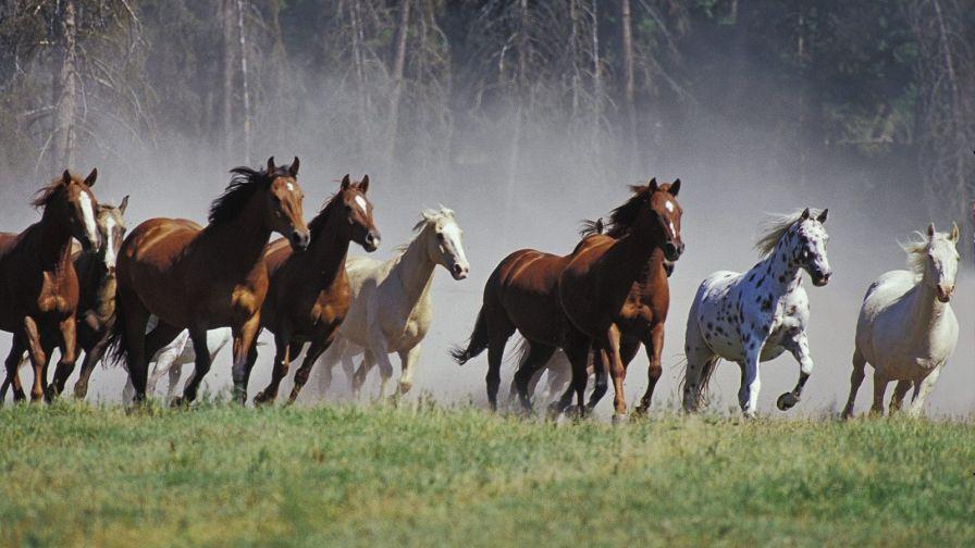 Seven Running Horses Hd Wallpaper Wallpapers Net