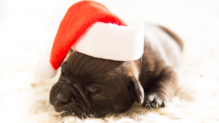 Sleeping Black Puppy Wearing White and Red Santa Hat HD Wallpaper