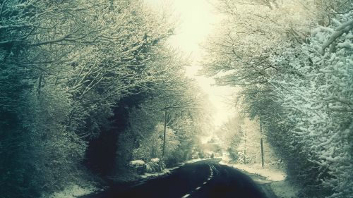 Snow Trees and Road
