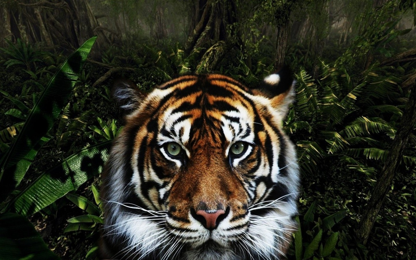 Tiger in jungle HD Wallpaper