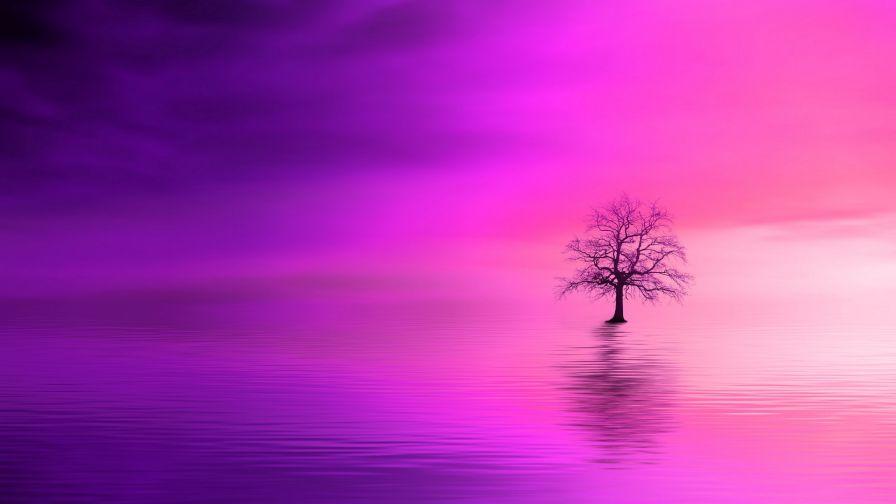 Tree Under A Pink Horizon Hd Wallpaper Wallpapersnet