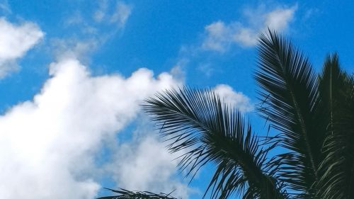 Tropical trees under the clouds HD Wallpaper