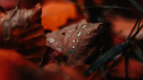 Water drops on a leaf HD Wallpaper