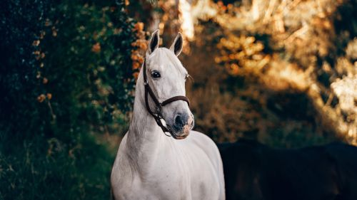 White horse in the sunlight HD Wallpaper