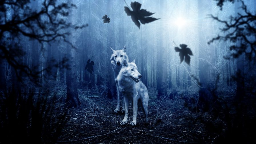 Wolves At Night In The Forest Hd Wallpaper Wallpapers Net