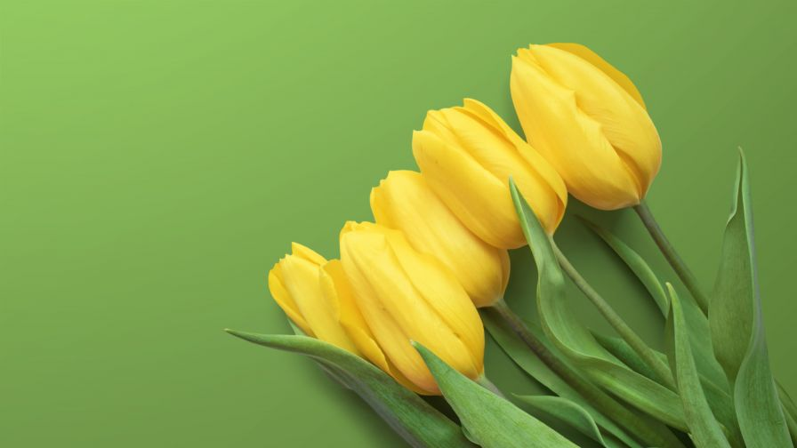 Yellow Tulips 4K Wallpaper
