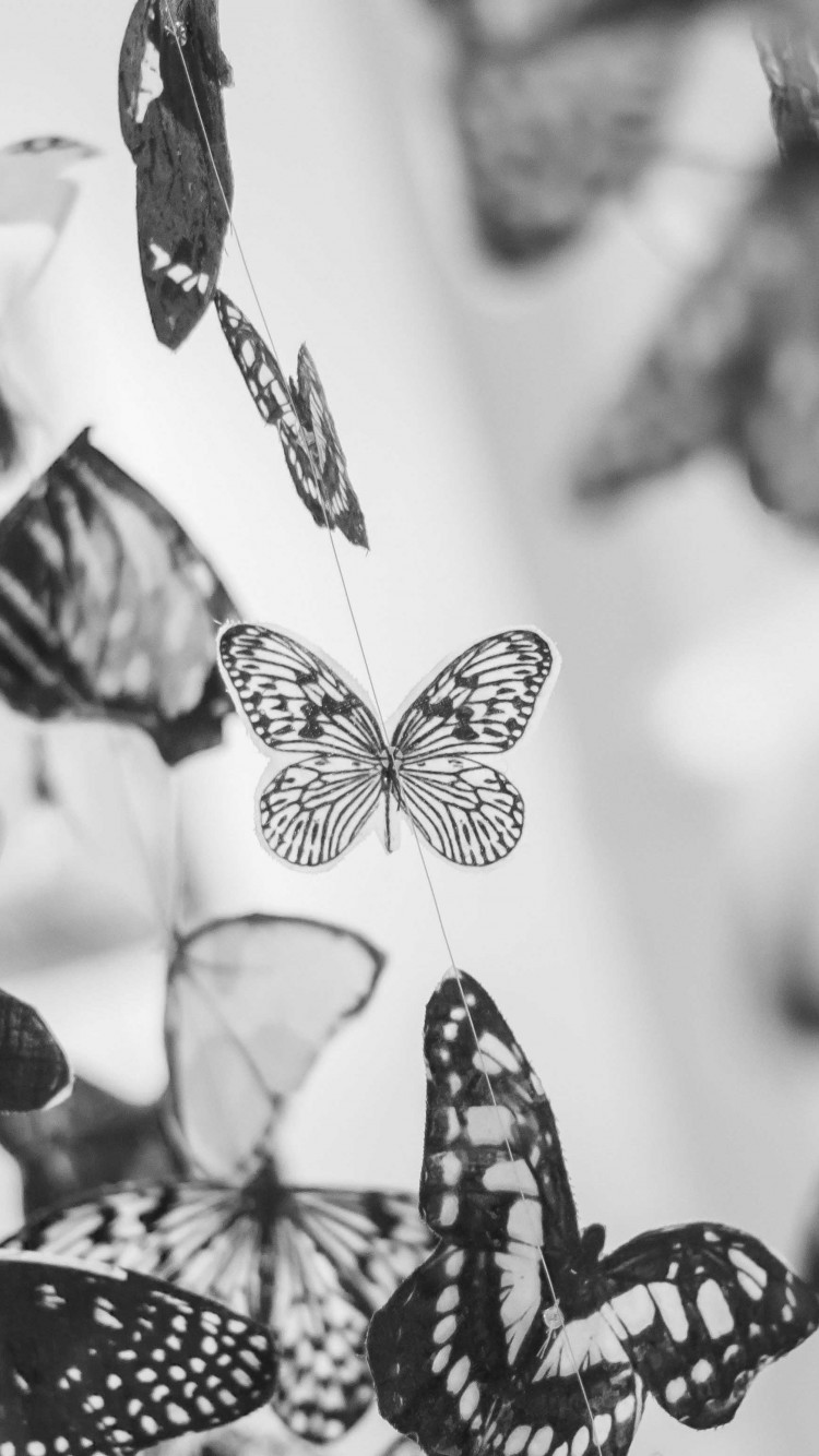 Colorful Beautiful Black And White Butterfly Wallpaper For Desktop