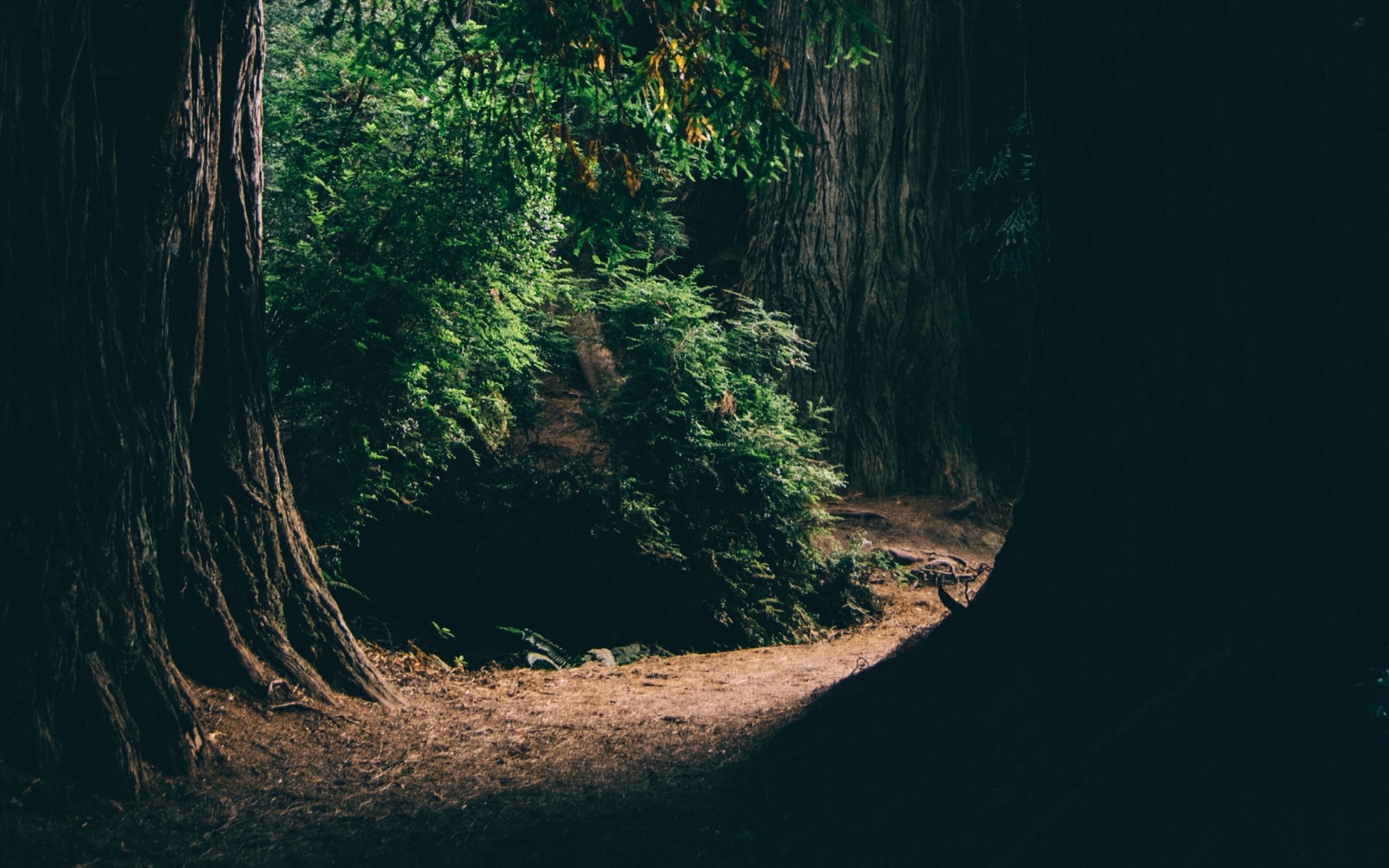 Dark Forest Passage Hd Wallpaper 13 Retina Macbook Pro Hd Wallpaper Wallpapers Net